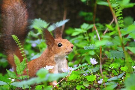 A squirrel in the grass photo