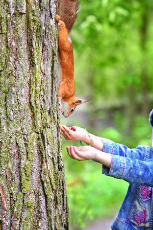 Kids hand feeding squirrel photo