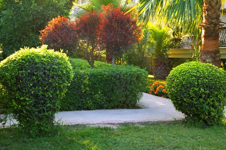 bush trimming: Tropical garden with palm and bush