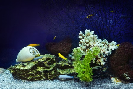 fishtank: Aquarium with fishes and coral Stock Photo