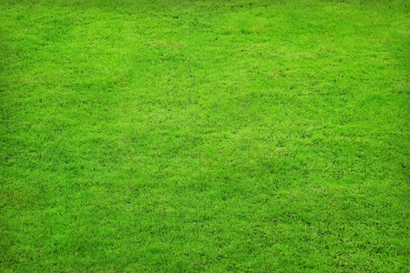 Close-up of green grass photo