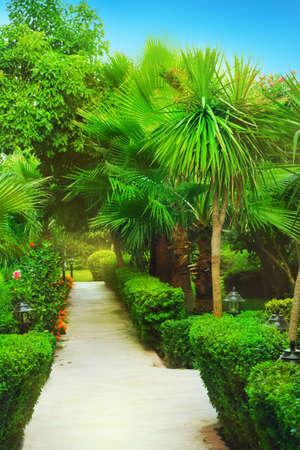 palm garden: Tropical garden with green palm
