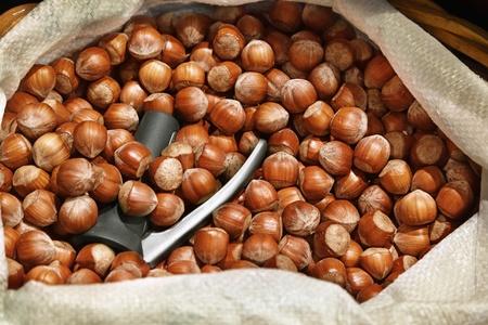 Hazelnuts in a white sack Stock Photo - 13071700