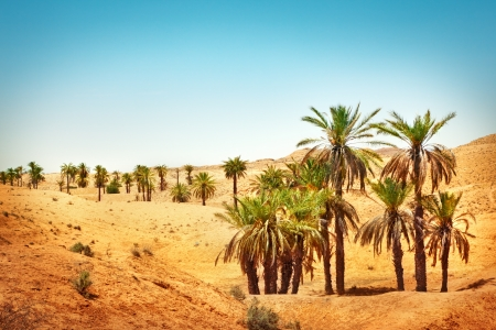 Palm trees in Sahara desert Stock Photo