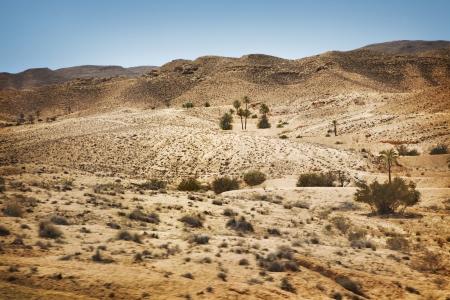 Palm trees in Sahara desert photo