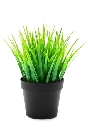 Potted plants: Green grass in black pot