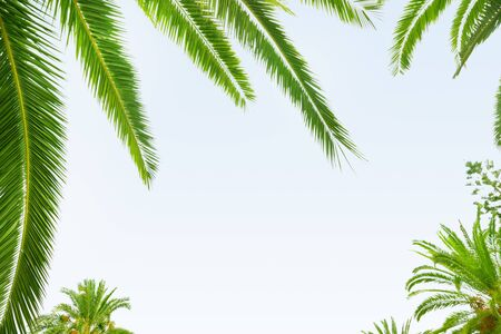 Palm leaf on white background photo