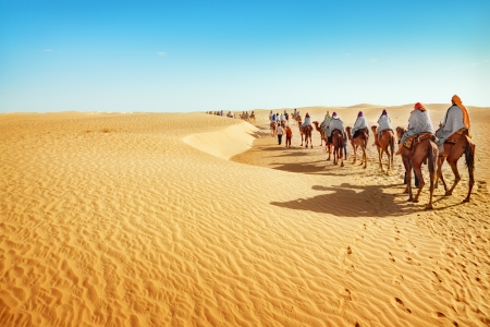 camel: People in the Sahara desert