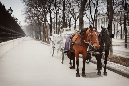 horse drawn carriage: Horses and carriage, Vienna, Austria