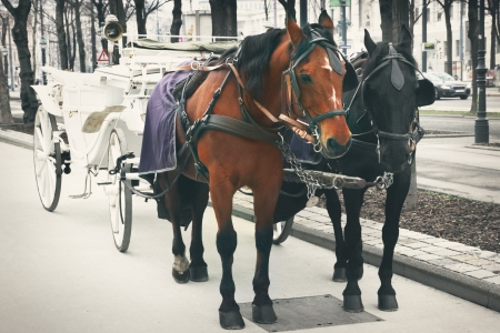 hackney carriage: Horses and carriage, Vienna, Austria