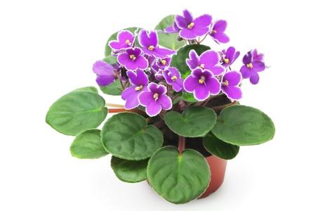 flowerpots: Violet