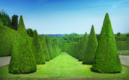 Conical hedges lines from Versailles Chateau