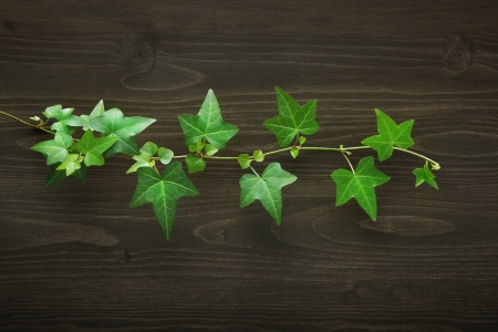 Wood background with ivy photo