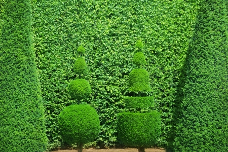 formal garden: Conical hedges lines from Versailles Chateau
