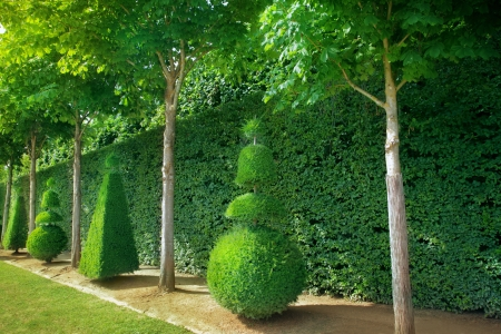 conical: Conical hedges lines from Versailles Chateau