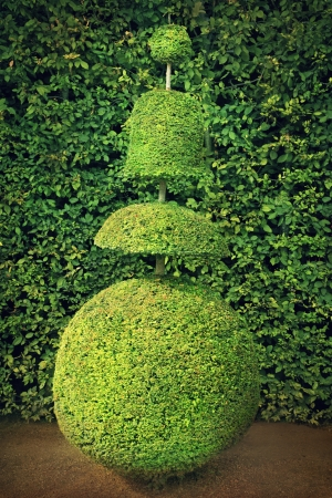 topiary: Conical hedges lines from Versailles Chateau
