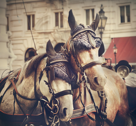 horse drawn: Horses