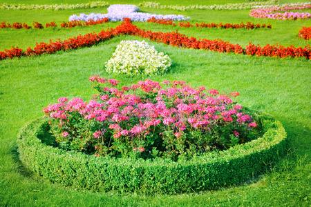 begonia: Flowerbed