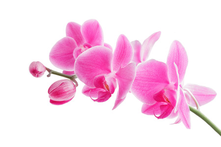 fragrant scents: Pink orchid