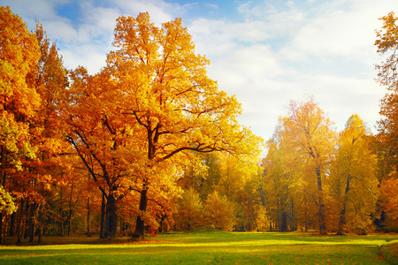 serene landscape: Autumn landscape Stock Photo