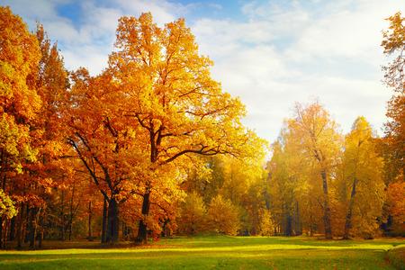 paisaje natural: Paisaje de oto�o Foto de archivo