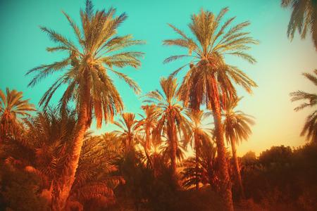 dry tree: Palms