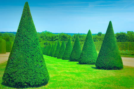 formal garden: Topiary trees Stock Photo