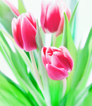 colourfully: Tulip bouquet on white background