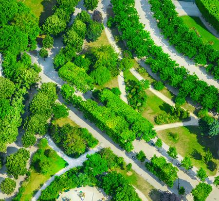 tree top view: Vue depuis le haut du jardin