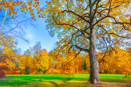 fall beauty: Autumn landscape Stock Photo