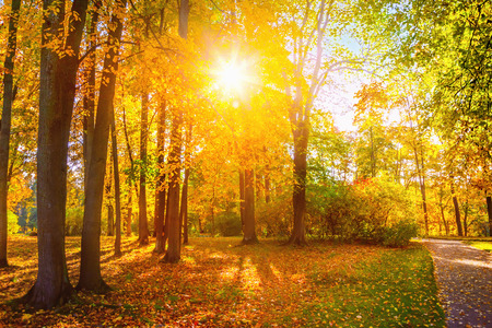 sunshine background: Autumn landscape Stock Photo