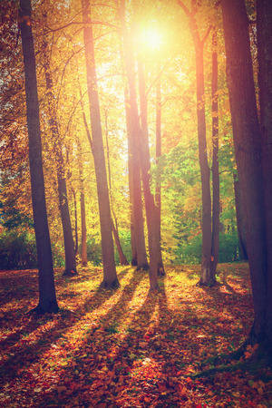 Autumn landscape Banco de Imagens