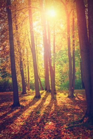 tree  forest: Autumn landscape Stock Photo