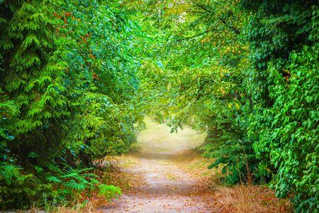 park path: Path in a summer park