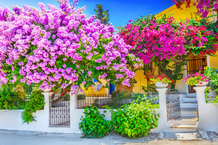 flowers garden: House with bougainvillea