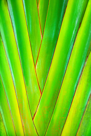 veining: Plant leaf Stock Photo
