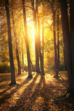 field maple: Autumn landscape Stock Photo
