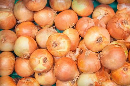 raices de plantas: Cebollas