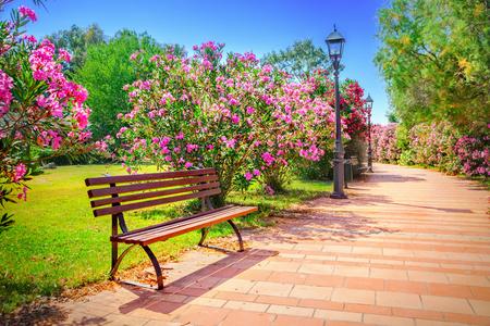 garden bench: City park