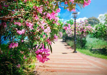 City park with oleander bushes