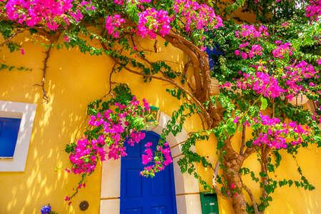 Old wooden door with big flower tree in Assos village in Kefalonia, Greece