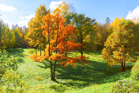 Autumn landscape with yellow trees