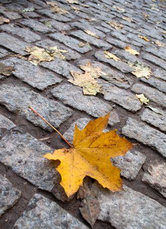 Yellow maple leaf on the autumn cobblestone photo