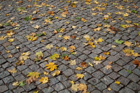 Yellow maple leaves on the autumn cobblestone photo