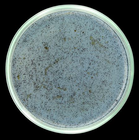 Sterile agar petri plate with small drops of crude oil. All spots and dots are petroleum drops. This media will be used for oil-degrading microorganisms cultivation. Isolation on a black background. Sharp isolation by pen tool.