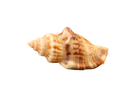 Exemplar: The small rigid conch of gastropoda mollusk isolated by pen. Stock Photo