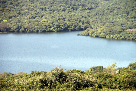 dense forest: Panoramic view of a lake in a dense forest with lush green large trees all around