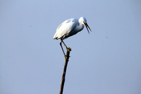onwards: This cute migratory bird, white stork, visible in India from the month of November onwards
