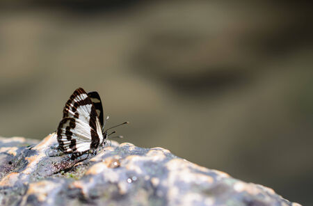 beuty of nature: beautiful Butterfly on rock in nature