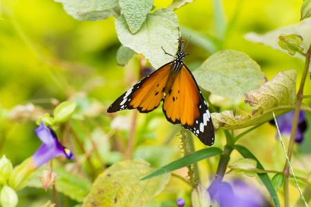 Orange butterfly  in  Nature background photo